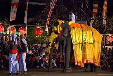 Ceremonial elephant in the Navam Maha Perahera, Colombo, Sri Lanka, Asia