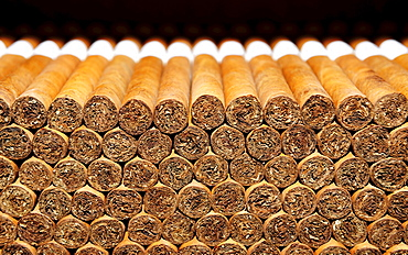 Cigars, cigar factory in Punta Cana, Dominican Republic, Caribbean
