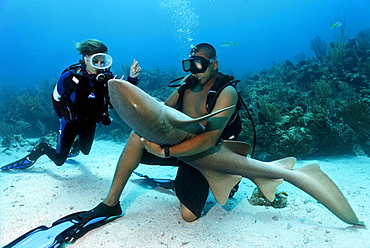 Scuba diver watching her diving instructor stroking the belly of a Nurse Shark (Ginglymostoma cirratum) in way that causes the shark to fall into a state of apathy, barrier reef, San Pedro, Ambergris Cay Island, Belize, Central America, Caribbean