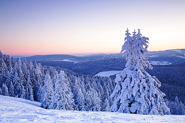 Snow covered trees on Mt. Belchen at sunrise, Black Forest, Baden-Wuerttemberg, Germany, Europe