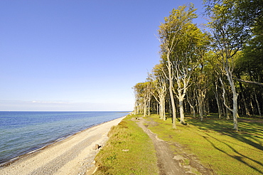 Coast near Nienhagen with the adjacent Nienhaeger Holz nature reserve, also called the 'spook forest', Bad Doberan district, Mecklenburg-Western Pomerania, Germany, Europe