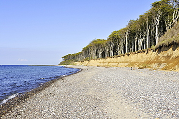 Gravel beach near the adjacent Nienhaeger Holz nature reserve, also called the 'spook forest', Bad Doberan district, Mecklenburg-Western Pomerania, Germany, Europe