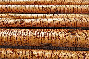 Peeled pine logs (Piceoideae)