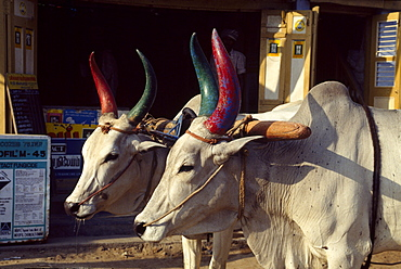 Ox cart in Kanchipuram, Tamil Nadu, India, Asia