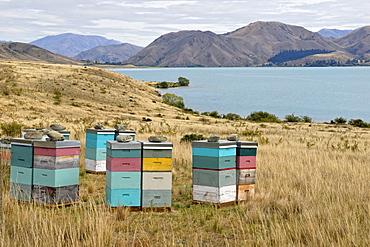 Beehhives at Lake Waitaki, Highway 83, South Island, New Zealand