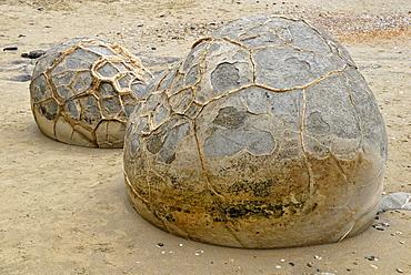 Rock balls on the beach at low tide, geological formation of the Moeraki Boulders, Moeraki, East Coast, South Island, New Zealand