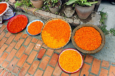 Saffron flowers drying in the open air, Luang Prabang, Laos, Southeast Asia