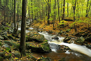 Autumn landscape along the mountain stream of Ilse, Harz, Saxony-Anhalt, Germany, Europe