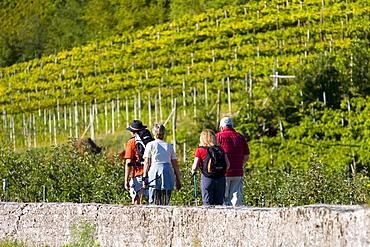 Hikers, vineyard, Kaltern, province of Bolzano-Bozen, Italy, Europe
