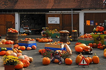 Different types of pumpkin (Cucurbita), and gourds (Cucurbita pepo), decorated for sale on a farm, Dormitz, Upper Franconia, Bavaria, Germany, Europe