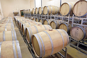 Wine cellar with oak barrels