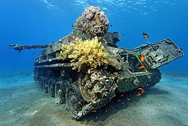 American tank M42 Duster with self-propelled 40mm anti-tircraft gun, wreck, Hashemite Kingdom of Jordan, Red Sea, Western Asia