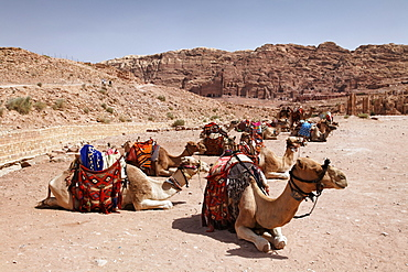 Dromedaries or Arabian Camels (Camelus dromedaius), saddled up, Royal Tombs, Petra, the capital city of the Nabataeans, rock city, UNESCO World Hertage Site, Wadi Musa, Hashemite Kingdom of Jordan, Orient, Middle East, Asia