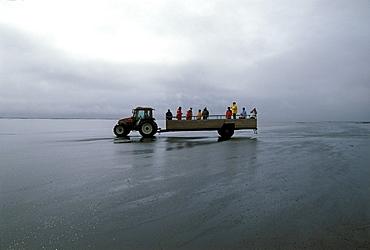 Transport through mudflats to the Ingolfshoefi cliffs, Ingolfshoefdi, a bird rock, South Iceland, Iceland, Europe