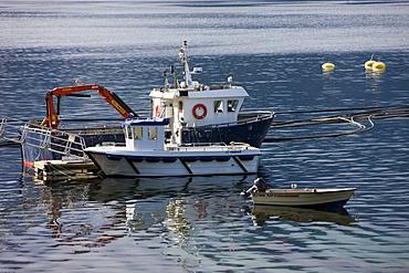 Salmon farming, Raftsundet, island of AustvÂgoya, Lofoten, Norway, Scandinavia, Europe