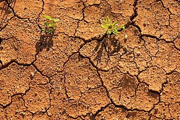 Soil surface, dryness, Sturt National Park, New South Wales, Australia