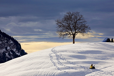 Photographer in the snow in front of a tree in the Alpstein mountains, winter light in the Swiss Alps, Switzerland, Europe