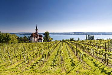 Pilgrimage Church of Birnau surrounded by vineyards, Lake Constance, Baden-Wuerttemberg, Germany, Europe