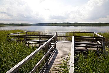 Lookout platform on Priesterbaeker Lake, Mueritz National Park, Mecklenburg-Western Pomerania, Germany, Europe
