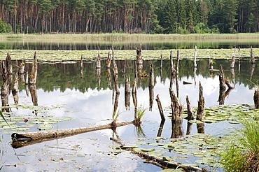 Wienpietschseen Lakes, Mueritz National Park, Mecklenburg-Western Pomerania, Germany, Europe
