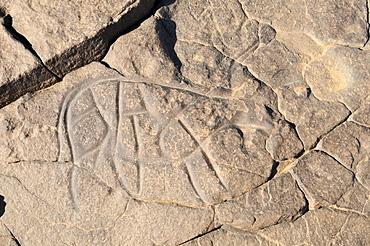 Prehistoric rock engraving of a cow or bull, neolithic rock art of Tinterhert, Dider Valley, Tassili n'Ajjer National Park, Unesco World Heritage Site, Wilaya Illizi, Algeria, Sahara, North Africa