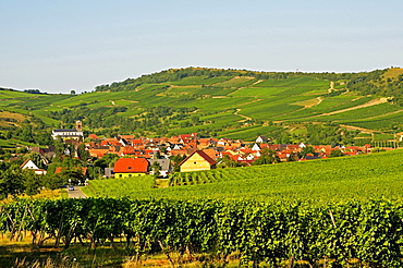 Westhalten wine village in the Vallee Noble on the Alsace Wine Route, Route des Vins d'Alsace, Upper Rhine, Alsace, France, Europe