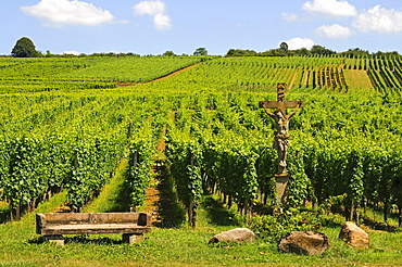 Vineyards on the Bollenberg hillside with stone crucifix, Orschwihr, Alsace, France, Europe