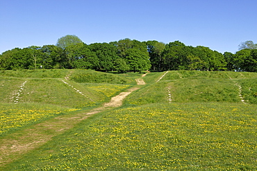 Badbury Rings, an Iron Age ring fort to the east of Dorset, about 2200 years old, southern England, England, United Kingdom, Europe