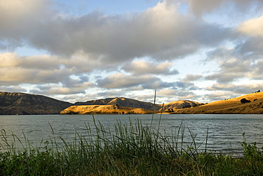 Evening at the Bay of Port Levy, Banks Peninsula near Christchurch, South Island, New Zealand
