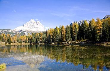 Autumn trees on lake Autorno, Tre Cime di Lavaredo, Dolomites, Province of Bolzano-Bozen, Italy, Europe