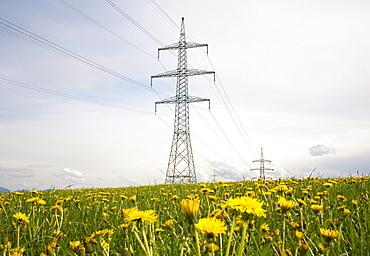 Electricity pylons, power poles, flowering meadow with dandelions, Paehl, Upper Bavaria, Bavaria, Germany, Europe
