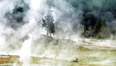 Steaming geysers and hot springs, Fairy Creek, Firehole Lake Drive, Lower Geyser Basin, Yellowstone National Park, Wyoming, United States of America, USA