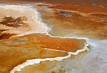 Effluent area of the Canary Spring Terrace, limestone sinter terraces, geysers, hot springs, colorful thermophilic bacteria, microorganisms, Mammoth Hot Springs Terraces in Yellowstone National Park, Idaho, Montana, Wyoming, America