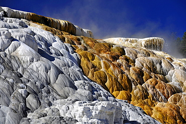 Palette Spring Terrace, Lower Terraces, limestone sinter terraces, geysers, hot springs, colorful thermophilic bacteria, microorganisms, Mammoth Hot Springs Terraces in Yellowstone National Park, Wyoming, United States of America, USA
