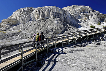 Boardwalk on Mound and Jupiter Spring Terrace, Main Terrace, limestone sinter terraces, geysers, hot springs, Mammoth Hot Springs Terraces in Yellowstone National Park, Wyoming, United States of America, USA