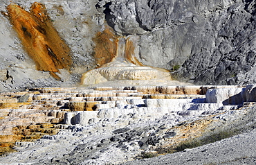 Minerva Spring Terrace, Lower Terraces, limestone sinter terraces, geysers, hot springs, Mammoth Hot Springs Terraces in Yellowstone National Park, Wyoming, United States of America, USA