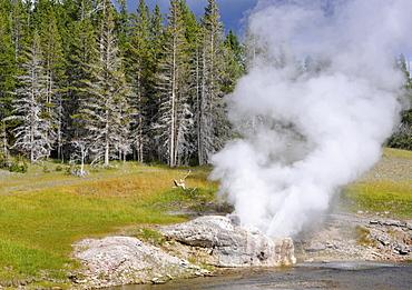 Riverside Geyser Eruption, Upper Geyser Basin, geothermal springs in Yellowstone National Park, Wyoming, United States of America, USA