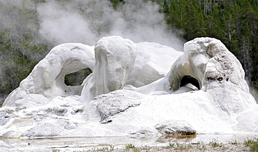 Grotto Geyser, Upper Geyser Basin, geothermal springs in Yellowstone National Park, Wyoming, United States of America, USA