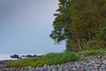 Rocky beach with coastal forest, Nardewitz, Lohme, Ruegen, Mecklenburg-Western Pomerania, Germany, Europe