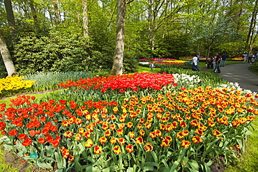 Annual flower show with mostly tulips, Keukenhof flower garden, Lisse, North Holland province, Netherlands, Europe