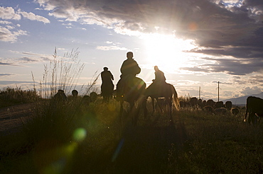Rider in back light, sunset, Issy Koel, Kyrgyzstan, Central Asia