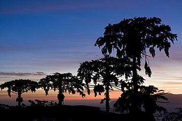 Trees in sunset, Fogo, Cabo Verde, Cape Verde, Africa