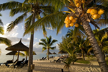 Coconut palms on the beach of Le Paradis Hotel, Mauritius, Africa