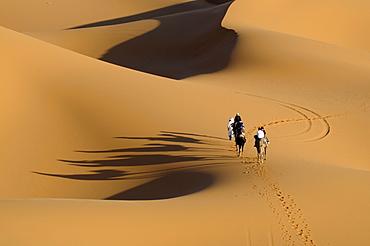Camel caravan crossing the sand dunes of the Sahara, Merzouga, Morocco, Africa