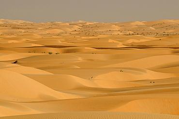 Sahara, near Chinguetti, Mauretania, northwestern Africa