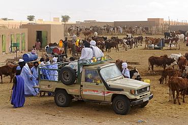 Trading on the camel market of Nouakchott, Mauritania, northwestern Africa