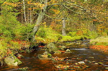 Bode river near Braunlage in autumn, Harz mountain range, Lower Saxony, Germany, Europe