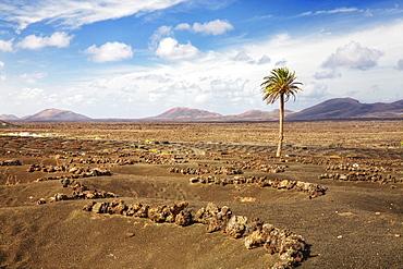 View over the wine growing area of La Geria towards the Montanas del Fuego mountains, Lanzarote, Canary Islands, Spain, Europe
