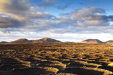 Wine growing area of La Geria in the evening light, Lanzarote, Canary Islands, Spain, Europe