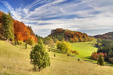 Juniper bushes on Lochen mountain in autumn, Zollernalb district, Swabian Alps, Baden-Wuerttemberg, Germany, Europe